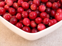 500 Stevens Cranberry Vines (Plants) BULK PRICE